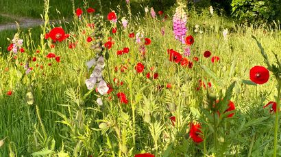 Wild flowers on UWE campus
