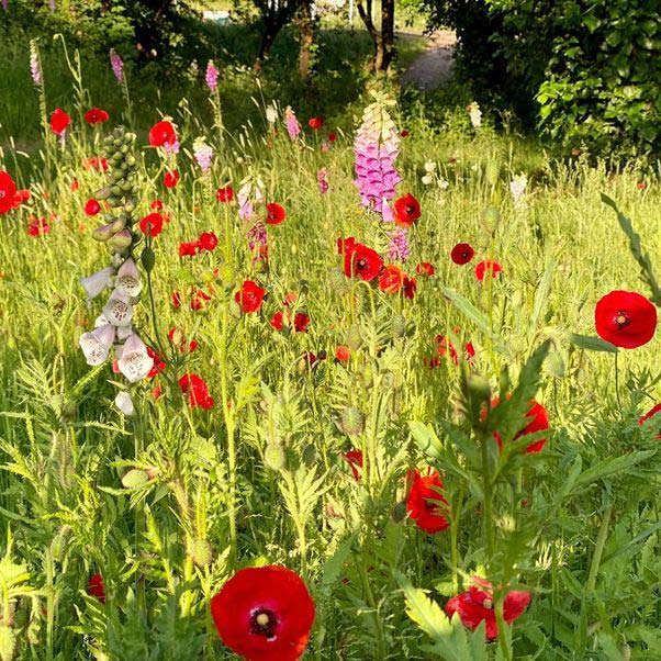 Wild flowers and meadowscaping on UWE campus