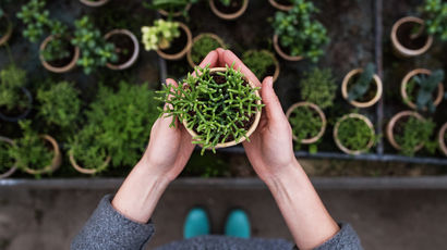 Woman holding green plant in her hands
