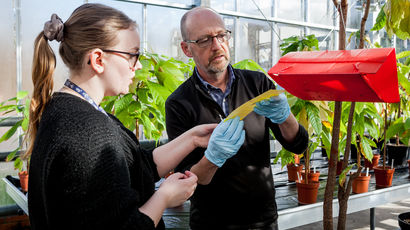 Two scientists looking at plant materials in a greenhouse.